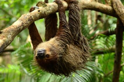 gmat sloth