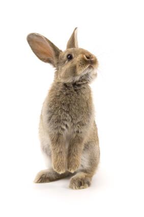 gmat weighted average rabbit