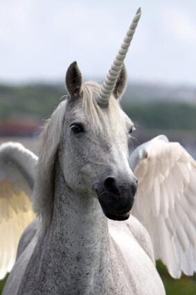 gmat unicorn