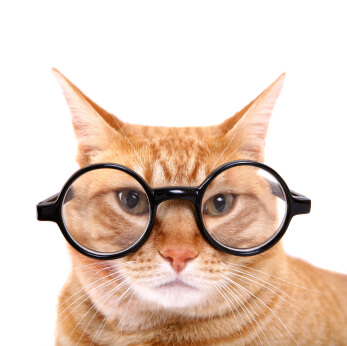 gmat cats